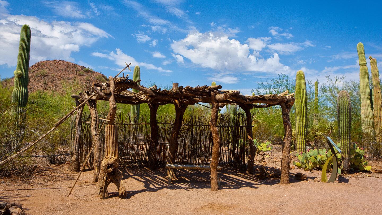 Plants & People of the Sonoran Desert Loop Trail