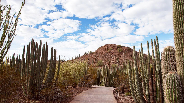 The Sonoran Desert Nature trail at the desert botanical gardens