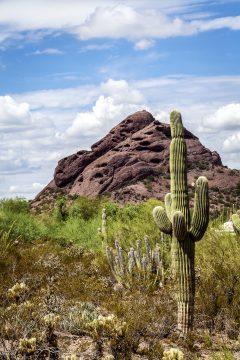 Papago Views at Desert Botanical Garden